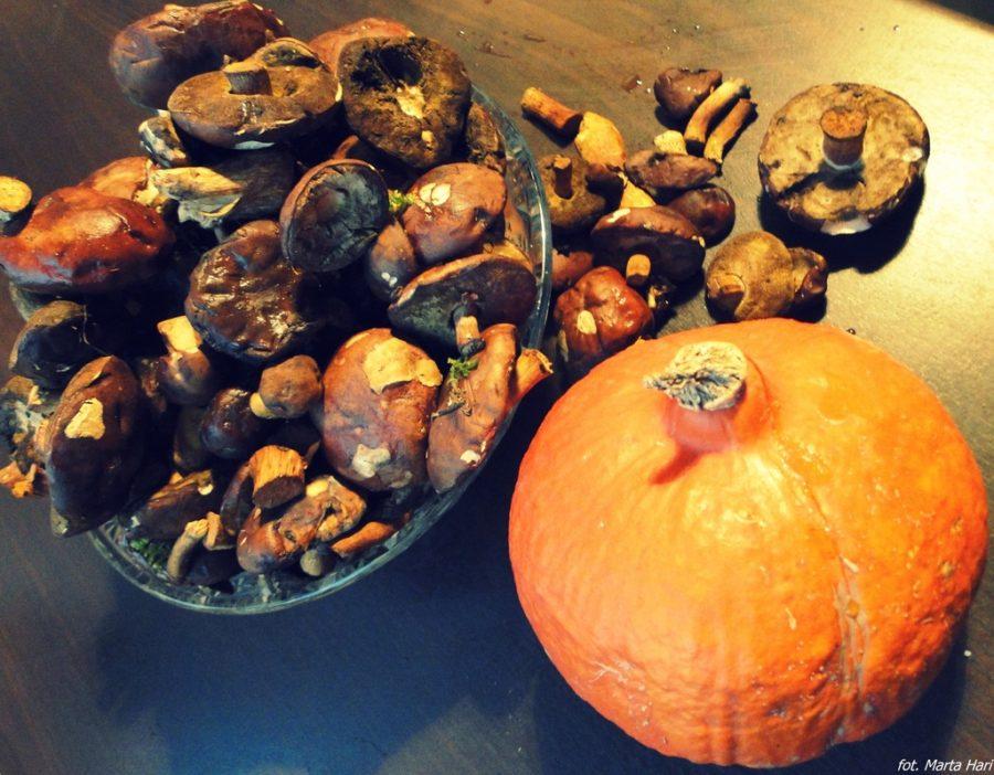 Październik w smakach dyni i grzybów